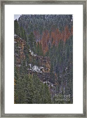 A Hint Of Brown Framed Print