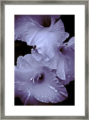 A Hint Of Purple Framed Print by Peggie Strachan