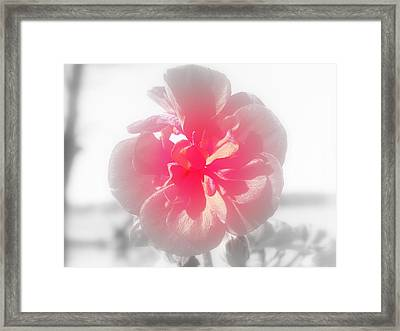A Hint Of Red Framed Print by Lisa Wooten