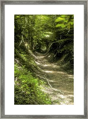 A Hole In The Forest Framed Print by Bob Phillips