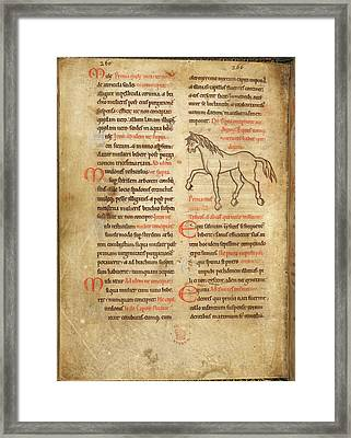 A Horse. A Herbal And Bestiary Pharmacopo Framed Print by British Library