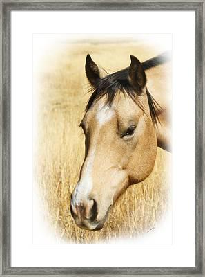 A Horse Framed Print by Ernie Echols