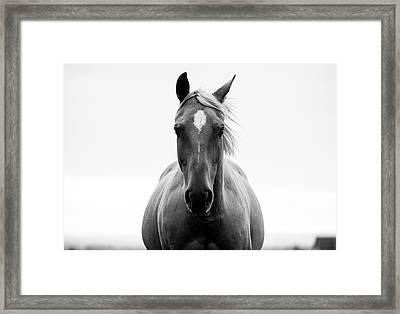 A Horse In A Field Framed Print by Jordan Siemens