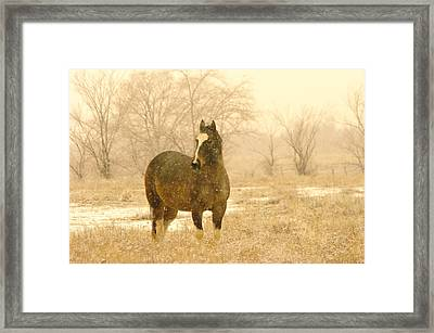 A Horse In The Snow Framed Print