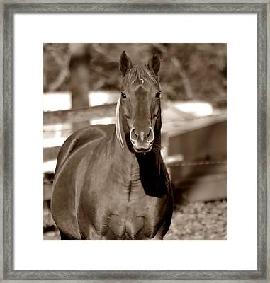 A Horse Is A Horse Framed Print by Deena Stoddard