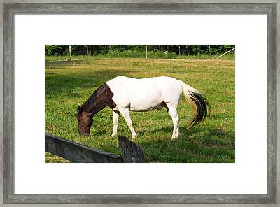 A Horse Named Dipstick Framed Print