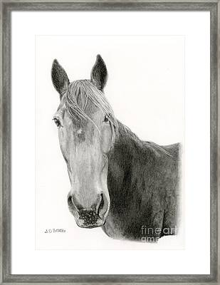 A Horse Of Course Framed Print