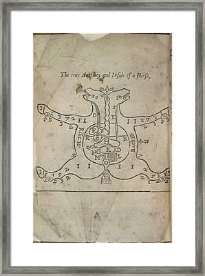 A Horse's Anatomy Framed Print