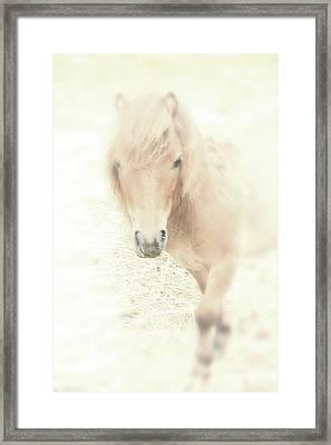 A Horse's Spirit Framed Print