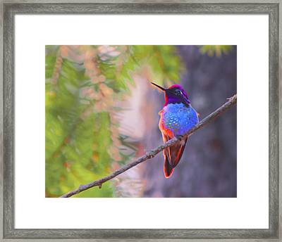 A Hummingbird Resting In The Evening Light. Framed Print