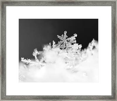 A Jewel Of A Snowflake Framed Print by Rona Black
