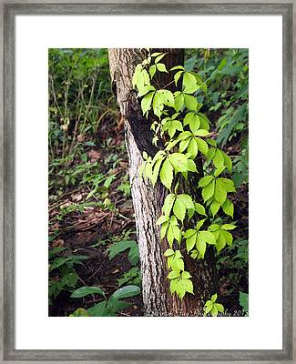 Framed Print featuring the photograph A Journey To The Canopy by Deborah Fay