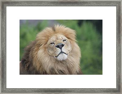 A King's Smile Framed Print by Leigh Ann Hartsfield