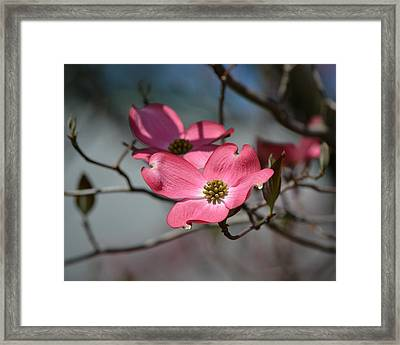 A Kiss Of Pink Framed Print