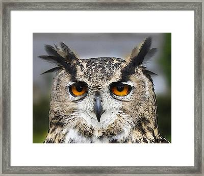 A Knowing Look Framed Print