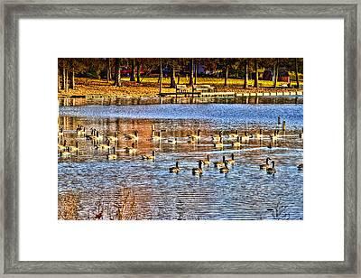 A Lake Full Of Life Framed Print