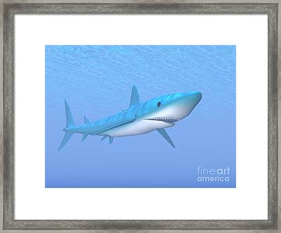 A Large Blue Shark Swimming Quietly Framed Print by Elena Duvernay