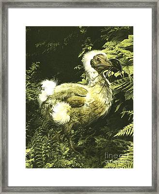 A Large Dodo Bird With Twig In Mouth Framed Print
