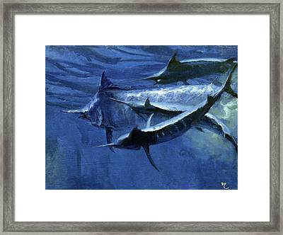 A Large Female Black Marlin Is Courted Framed Print by Stanley Meltzoff / Silverfish Press