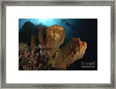 A Large Sponge With Diver Framed Print by Steve Jones