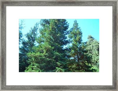 A Larger Christmas Framed Print by Kiros Berhane