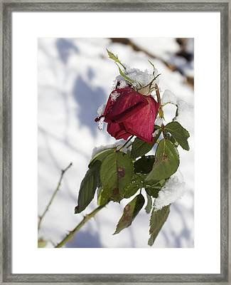 An Early Snow Framed Print by Jane Eleanor Nicholas