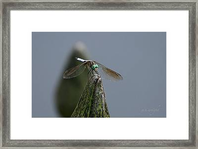 A Launch Pad Framed Print by Yvonne Wright