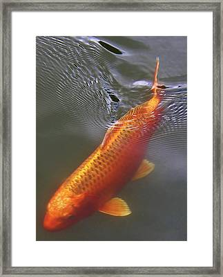 A Leisurely Swim Framed Print by Bruce Bley