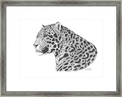 A Leopard's Watchful Eye Framed Print