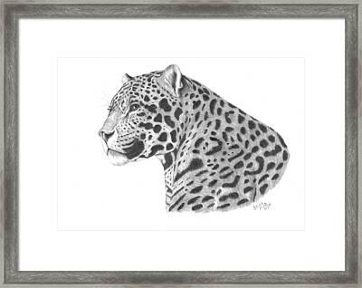 A Leopard's Watchful Eye Framed Print by Patricia Hiltz