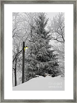 A Light Snow Framed Print by Lois Bryan