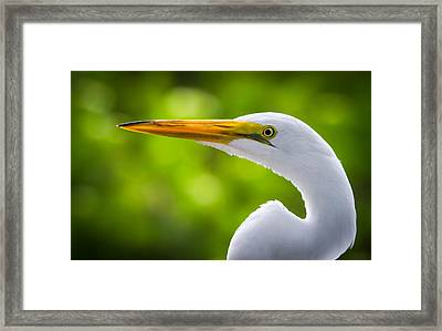 A Lighter Version Of A Snowy Egret Framed Print by Andres Leon