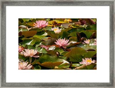 A Lily Carpet Framed Print