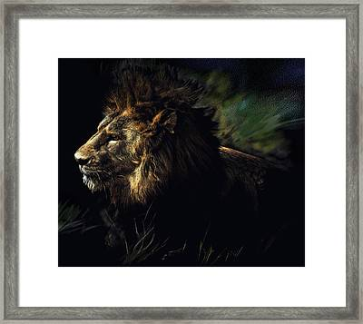 A Lion #1 Framed Print by John Norman Stewart