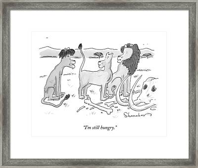 A Lion Cub Speaks To His Parent Lions Framed Print by Danny Shanahan