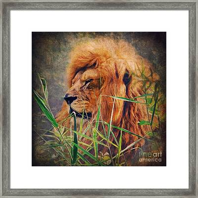 A Lion Portrait Framed Print by Angela Doelling AD DESIGN Photo and PhotoArt