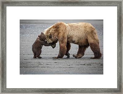 A Little Bear Hug Framed Print