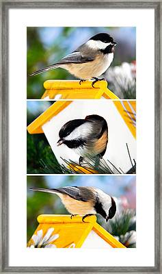 A Little Bird Told Me - Three Chickadees Triptych Framed Print