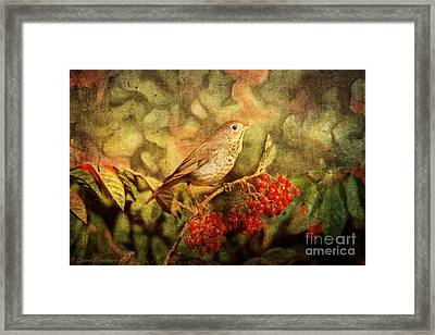 A Little Bird With Plumage Brown Framed Print