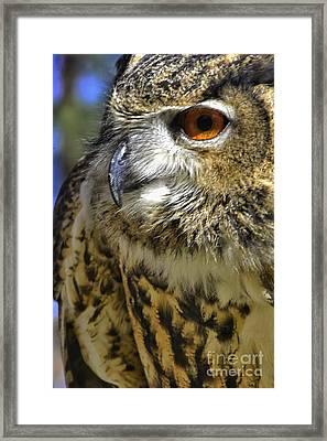 A Little Birdie Is Watching You Framed Print by George Gewinner II