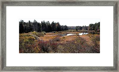 A Little Bit Of Autumn Left On The Moose Framed Print by David Patterson