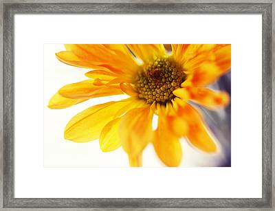 A Little Bit Sun In The Cold Time Framed Print