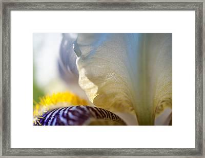 A Little Bit Sun. Macro Iris Series Framed Print