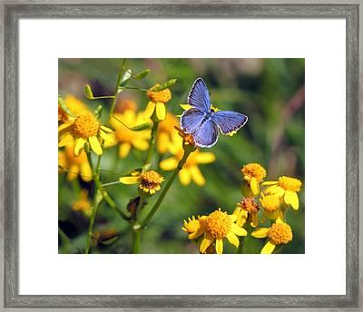 A Little Blue Framed Print