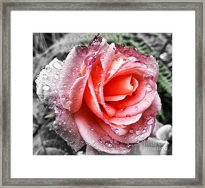 A Little Closer Framed Print by Heather L Wright