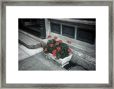 Framed Print featuring the photograph A Little Color In A Drab World by Rodney Lee Williams