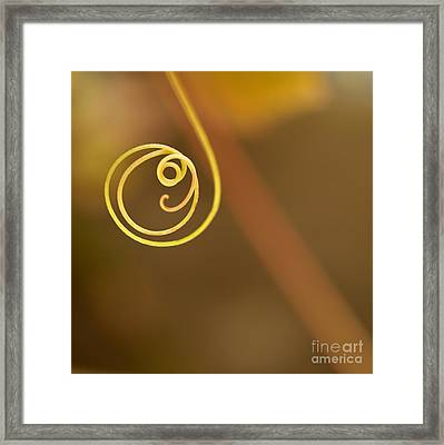 A Little Curl Framed Print by Sabrina L Ryan