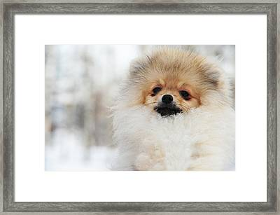 A Little Cutie Framed Print by Jenny Rainbow