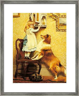 A Little Girl And Her Sheltie Framed Print