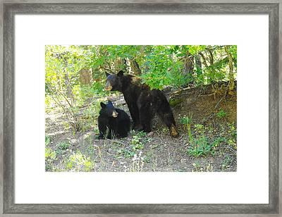 A Little Growl Before Departing Framed Print by Jeff Swan